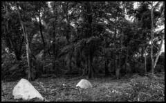 Anse Royale / Пляж Анс Рояль (dmilokt) Tags: природа nature пейзаж landscape море sea пляж beach песок sand пальма palm небо sky облако cloud dmilokt чб bw черный белый black white nikon d850