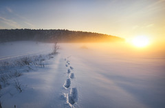 step by step (Lena Held) Tags: sunset sundown sun sunny sunshine sunlight down glow glowing sky snow ice icy cold coldy nature landscape scape land wood woodland forest clouds bavaria global world upperpalatinate travel canon 1635mm f4 weitwinkel step steps foodprints explore flickr