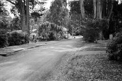 Hume Lane... (Matthew Paul Argall) Tags: canonsnappy20 fixedfocus 35mmfilm kentmere100 100isofilm blackandwhite blackandwhitefilm road street humelane