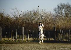 _DSC0626 (chris30300) Tags: camargue cheval