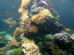 rhenen_2_034 (OurTravelPics.com) Tags: rhenen fish coral aquarium ouwehands dierenpark zoo