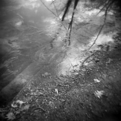 Silver Lake in Winter #17 (LowerDarnley) Tags: holga silverlake winter lake frozen ice reflection branches steps flooded saugus ma breakheartreservation