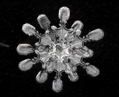 18feb19DD (peterobrien186) Tags: snow snowflake snowcrystal crystal physycs science climate climatechange winter macro twin two capped column cappedcolumn