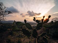 C e y l o n (davYd&s4rah) Tags: sunset kaktus sting sonnenuntergang sri lanka dambulla cave temple buddhism budhismus silent sun rays sonnenstrahlen cactus sparkles view dunst dawn dämmerung sky vsco ferne olympus em10markii laowa 75mm f20 uww wide angle weitwinkel wolken clouds holiday trip ceylon laowa75mmf20