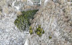 Une touche de vert (Olivier Rapin) Tags: combremontlegrand hiver mavicair cantondevaud suisse ch foret sapin arbre vaud romandie