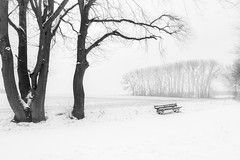 Winter in zwart-wit (aj.lindeboom) Tags: winter zwartwit landschappen landscape absoluteblackandwhite