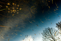 Starburst (tonguedevil) Tags: outdoor outside countryside winter nature pond water reflections trees plants grass sky cloud colour light sunlight shadows