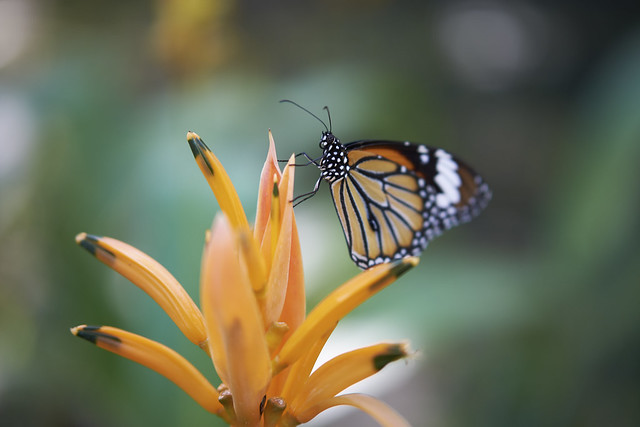 Colorful Butterfly image
