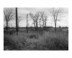 Idled U.S. Steel plant, Gary New Duluth (Richard C. Johnson: AKA fishwrapcomix) Tags: leicam2 leitzsummaron35mmf28 film ilfordxp1 analog analogue scanfromnegative filmisnotdead iusedtoshootfilm istillshootfilm blackandwhite bw monochrome trees autumn 1980s archive mybackpages industry building economicdecline trickledowndespair iwassomucholderthen utilitypole coldsmokestacks twilightofamericanindustry usedtomakethingshere