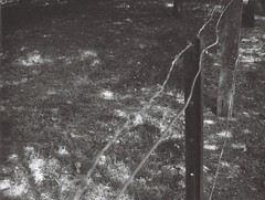 Wire fence (Matthew Paul Argall) Tags: continentalteleflasht52 110 110film subminiaturefilm lomographyfilm 100isofilm blackandwhite blackandwhitefilm grainyfilm fence