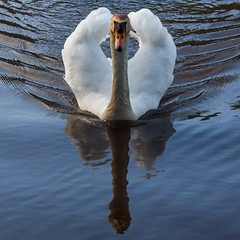 Full steam ahead (Eddie Btw) Tags: paignton devon lake