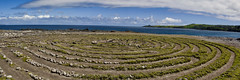 Makaluapuna Point labyrinth (Kirt Edblom) Tags: maui mauihawaii kapalua kapaluahawaii hawaii point makalupuna gaylene wife water waves waterscape milf grass maze labyrinth rocks rock rockformation ocean pacific pacificocean clouds blue bluesky bluewater green dragonsteeth panorama panoramamaker6 kirt kirtedblom edblom luminar nikon nikond7100 nikkor18140mmf3556 landscape
