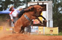 Matheus Giudici Almeida (Eduardo Amorim) Tags: gaúcho gaúchos gaucho gauchos cavalos caballos horses chevaux cavalli pferde caballo horse cheval cavallo pferd pampa campanha fronteira quaraí riograndedosul brésil brasil sudamérica südamerika suramérica américadosul southamerica amériquedusud americameridionale américadelsur americadelsud cavalo 馬 حصان 马 лошадь ঘোড়া 말 סוס ม้า häst hest hevonen άλογο brazil eduardoamorim gineteada jineteada