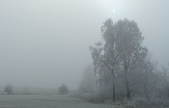 Frostige Nebelwelt (isajachevalier) Tags: landschaft eis nebel winter sachsen panasonicdmcfz150