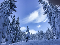 trees and snow and more trees and more snow (genelabo) Tags: schönberg fleck lenggries bayern bavaria ski snowboard snow schnee skitour sun alps berge 1621 m voralpen isartal genelabo sky himmel snowfield view white weiss deutschland germany wald bäume trees forest