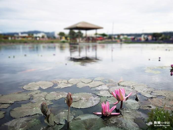 【台中后里】中社鬱金香花海|台中熱門景點IG打卡勝地 @魚樂分享誌