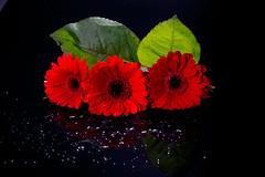 Rouge (pictopix) Tags: bpc studio flash rouge strobisme