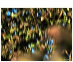 SOMETIMES, it all goes wrong. :) (pete Thanks for 5 Million Views) Tags: starling bird vogel star vögel winter bäume countryside nature nordpfalz animal sonne rhinelandpalatinate early morning sunbeams tree wood sunrays wild baum zweige sun tier licht illuminated sonnenstrahlen natur frühmorgens ast germany ransweiler birds light wintertag nordpfälzer garten pfalz portrait north palatinate rheinlandpfalz morgensonne tiere wintersonne illumination people photoadd additional info viewing privacy public safety level safe flag photo