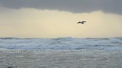 Seagull Чайка (unicorn7unicorn) Tags: море птица чайка wah seagull israel ישראל полет 365the2019edition 3652019 day59365 28feb19