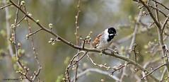 J78A0136 (M0JRA) Tags: birds humber ponds lakes people trees fields walks farms traylers