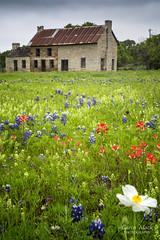 Bluebonnet House (Caren Mack Photography) Tags: texashillcountry texas hillcountry bluebonnets wildflowers 2019 carenmack