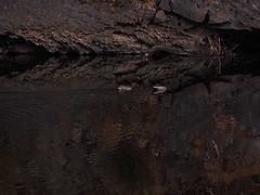 19.1 D sm (Dvd2u) Tags: dvd2u loongana mountainview atswimtwoducks upstream