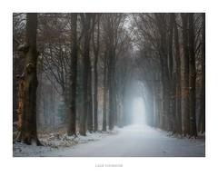 Lage Vuursche (http://www.paradoxdesign.nl) Tags: lage vuursche utrecht nederland holland netherlands dutch winter snow snowing lane woodland forest road zwarteweg