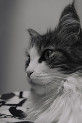 No Spirit' n' Shadow:Ne-ne-ne-ne-ne Ne-ne-ne-ne-ne Daughters of darkness Ne-ne-ne-ea-ne Ne-ne-ne-ne-ne. Click. (miyukiz4 ɥsıןƃuǝ ɹood) Tags: кошка mačka кот en katt köttur კატა un gat katze macska chat katė pisică котенок pisoi kačiukas kotek chaton cica kätzchen mačiatko kettlingur cat kitty