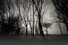 Down in the Fog! (Solent Poster) Tags: harting down pentax k1 2470mm landscape fog mist