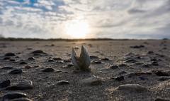 Good Morning World (Froschkönig Photos) Tags: good morning world goodmorningworld welt ostsee baltic dars dierhagen strand beach muschel shell seashell 2019 6000 a6000 ilce6000 sonyalpha6000 sunrise sonnenaufgang
