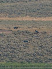 0621-J20 - Yellowstone - Cody-1808160913 (Chouettes de Crolles) Tags: 2018usa 2018usaj20yellowstonecody cody lieux usa vacancesété wyoming étatsunis us