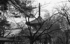 Tower among naked trees (odeleapple) Tags: nikon f2 carl zeiss planar 50mm kodaktmax100 film monochrome analog bw tree tower temple