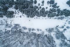 Winter Trails (Matt Champlin) Tags: aerialphotography aerial drone drones dji djiphantom4 phanto4pro djiphantom flight woods woodland snow snowy beautiful nature pristine untouched pure designs abstract track tracks 2019
