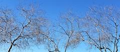 Trees (lightstagephotography) Tags: blueskies trees arizona phonepics