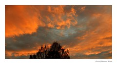 [ Warm darkening ] (Chris Séhenna) Tags: ciel sky cielo nuages clouds nube branches ramas coucherdesoleil sunset puestadelsol