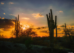 Arizona Sunset (Ken Mickel) Tags: arizona cacti cactus clouds cloudscape cloudy desert estrellla goodyeararizona kenmickelphotography landscape outdoors plants saguaro sky sunrays sunsets backlighting nature photography silhouette silhouettes sunset