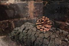 IMG_5661_p (thebiblioholic) Tags: pinecone fireplace