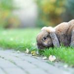 Een konijn thumbnail