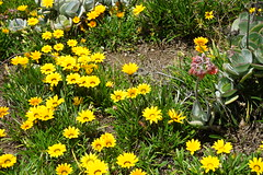 Flowers (Like_the_Grand_Canyon) Tags: new zealand neuseeland kiwi christchurch vacation travel holiday december 2018