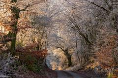 25122018-DSC_0064 (vidjanma) Tags: chemin matin givre soleil couleurs
