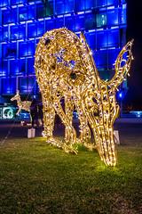 Grazing Light (Jared Beaney) Tags: canon canon6d photography photographer perth westernaustralia australia australian night lights light christmas cityofperth thecityatchristmas city kangaroo 2018