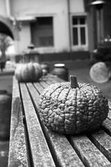 Pumpkin parade (photogunni) Tags: leica leicaiiia fomapan ei100 100asa arsimagofd