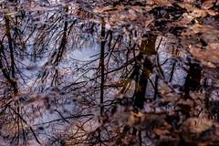 Winter Reflections (jfl1066) Tags: southbrunswicknj middlesexcounty winter nj davidsonsmill centralnj njoutdoors newjersey jan19