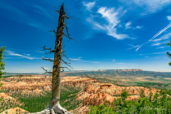 Bryce Point (dan@propeakphotography.com) Tags: america amphitheater blue blueskies bluesky boatmesa bristleconepoint brycecanyon brycepoint canyon clouds deadtree famousplace geologicformation green hoodoos internationallandmark landscape nps nationalpark nature northamerica orange powellpoint spring texture touristattraction travel traveldestination travelandtourism trees usa unitedstates utah yellow desert pinnaclephotography