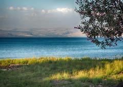 Sea of Galilee (tarnpulli) Tags: landscape biblescenery bible holyland seegenezareth seaifgalilee galilee israel