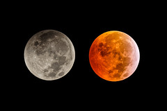 Moon Eclipse (Franck) (Club Astro PSA) Tags: astronomie lune eclipse astrophoto astronomy moon red rouge blood bloodmoon sky ciel deep night nuit star stars etoile dark noir sombre astro phase totaly shadow earth ombre terre totale totalité totality 2019 first premiere timelaps time laps film lunar lunaire
