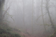 Foggy Forest Park-4 (kephart_kyle) Tags: 2019 foggy fog foliage forest hike january mist moss northwest nw oregon pacific park pnw portland rainforest winter