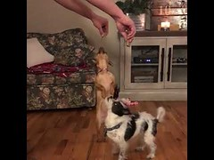 Puppy Snack Time - Cute Dogs (tipiboogor1984) Tags: awwstations aww cute cats dogs funny