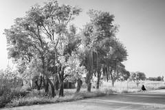 The Trees (Irene Becker) Tags: africa arewa imagesofnigeria kaduna kadunastate landscape nigeria nigerianimages nigerianphotos northnigeria westafrica zariakadunaexpressway northernnigeria village
