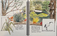 Sydney Royal Botanic Gardens. Spread inspired by the style of Pat Southern-Pearce. Ink and watercolour. (frindley) Tags: sketch watercolour watercolor sydney garden urbansketching ibis flora